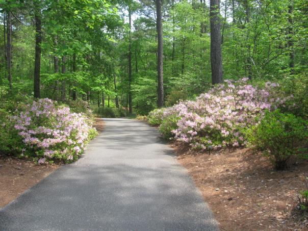 Azaleas that line the walkways and bike trails of Callaway Gardens.