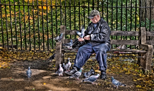 man-with-pigeons