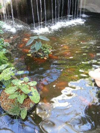 The water flows to the goldfish and koi ponds below.