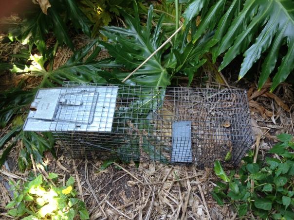 traps 001