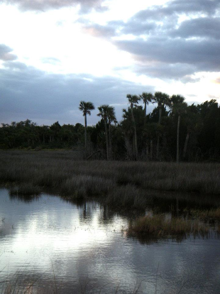 The marshy brackish waters of the intercoastals and all around places like Blackpoint Wildlife Drive Park where you can do bird watching.