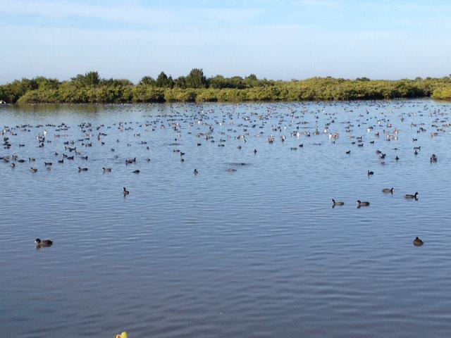 Ducks cover the ponds.