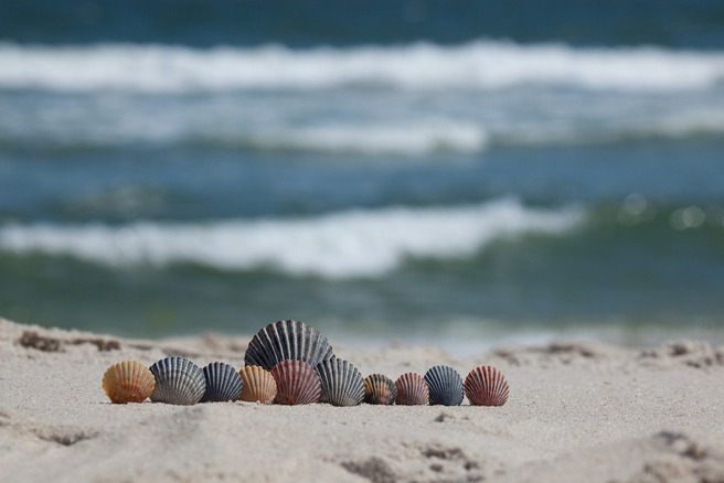 Shelling is popular because the shore is not so picked over as the crowded beaches.