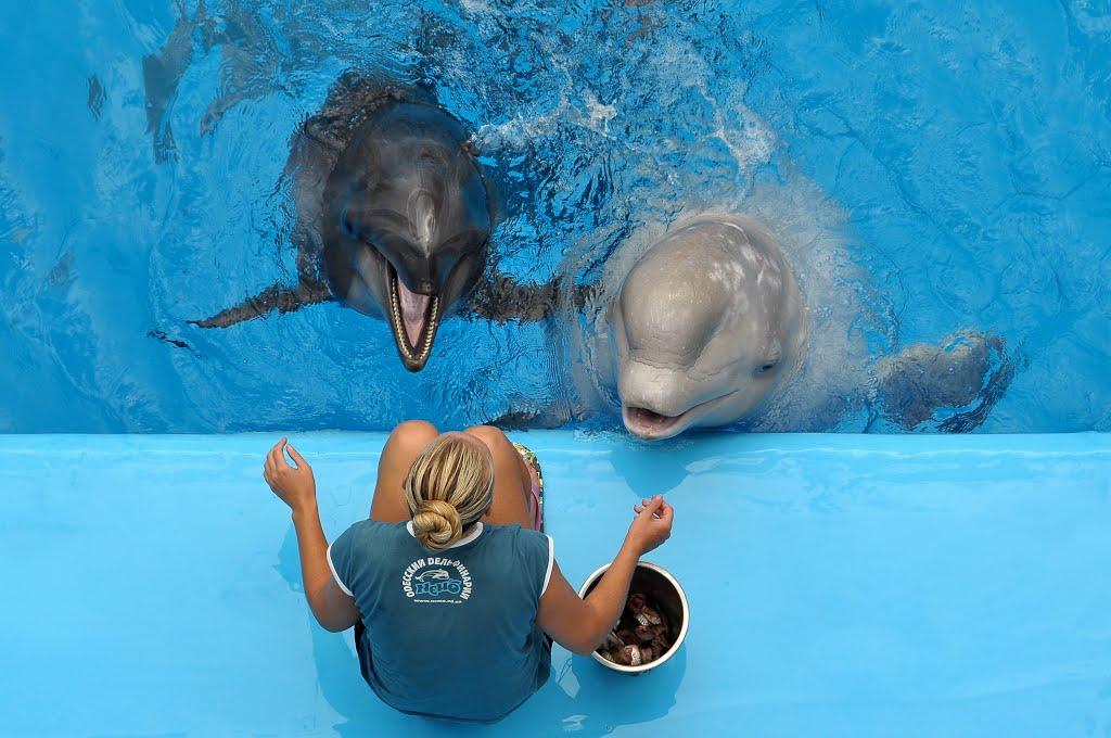 Dolphin left, beluga right.