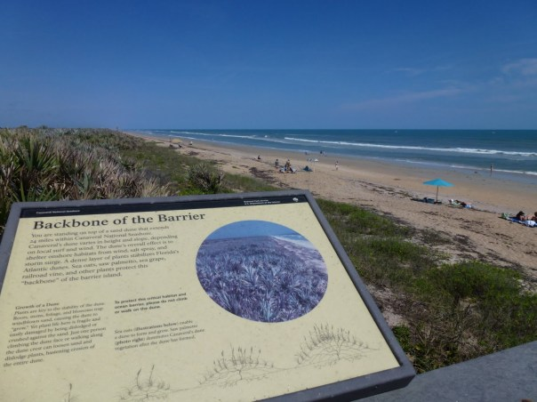 A trip across the boardwalk and you'll find an explanation on why the dunes are so important and why we need to keep off.