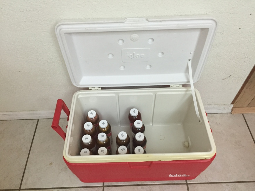 Place bottles into a cooler for safety and to keep dark at room temp. Don't forget to BURP them every couple of days. Keeping them in a cooler prevents glas and booch from spraying all over the place in case carbonation builds up and you have an explosion.